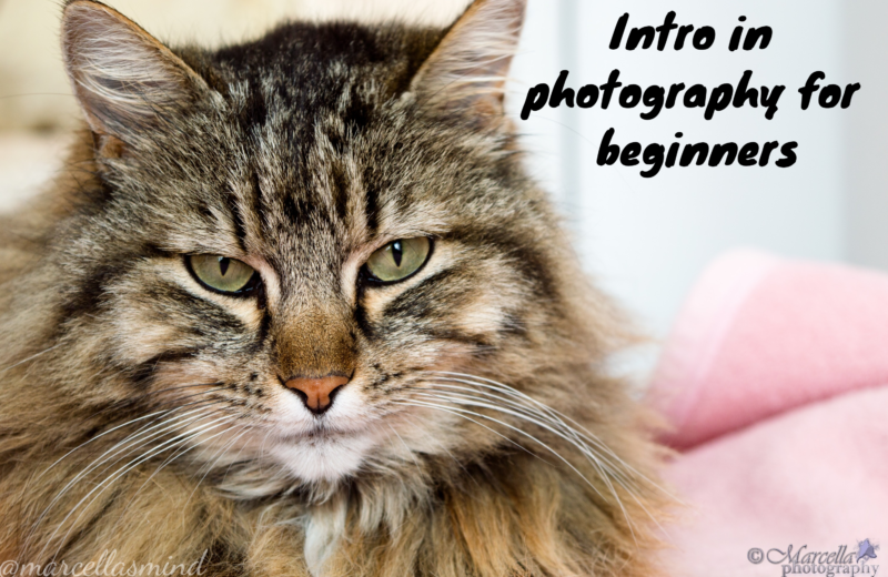 Intro in photography for beginners 8