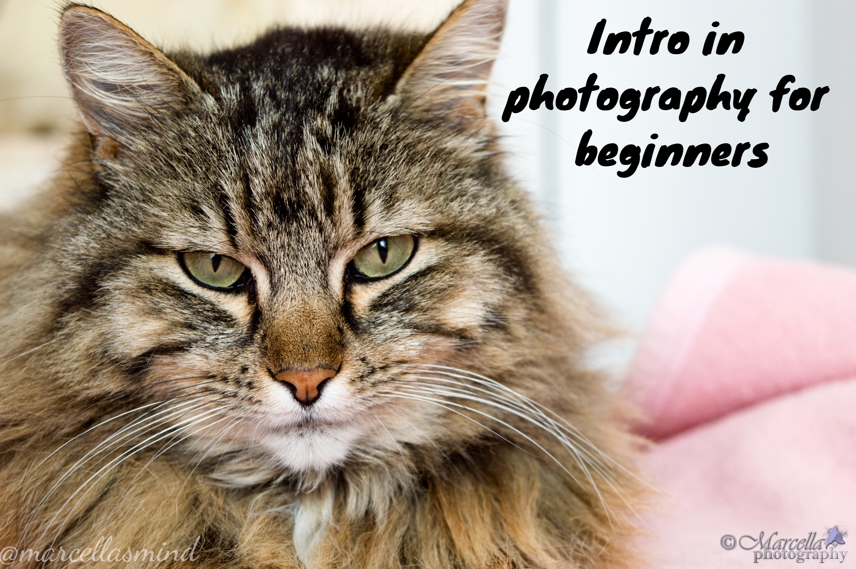 Intro in photography for beginners
