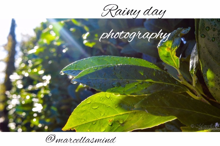 Rainy day photography